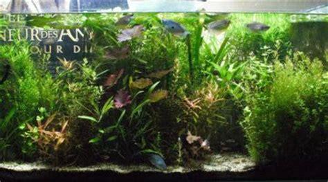 les filtres d aquarium pour les nuls