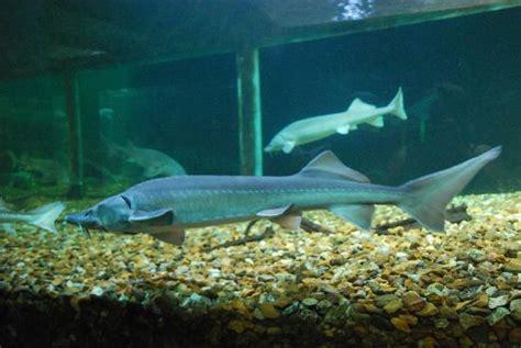 treffpunkt picture of grand aquarium de touraine lussault sur loire tripadvisor