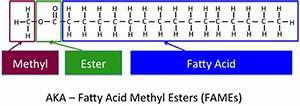 9.1 Terminology for Vegetable Oils and Animal Fats   EGEE 439: