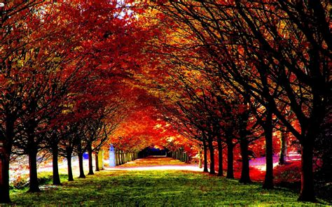 Beautiful Fall Backgrounds (50+ Images