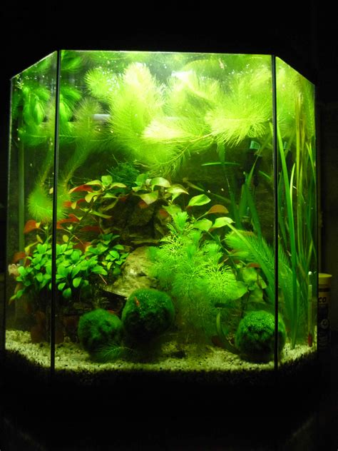 ph aquarium eau douce 28 images test ph pour aquarium eau douce 100 tests tropic marin