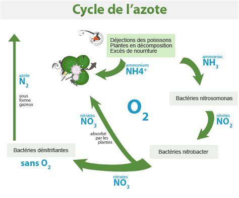 le cycle de l azote koi