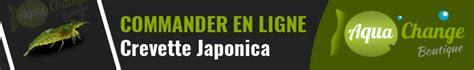 japonica caridina multidentata