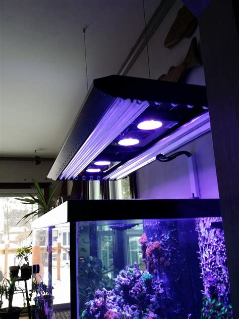 led radion t5 combos who s got em page 2 reef2reef saltwater and reef aquarium forum
