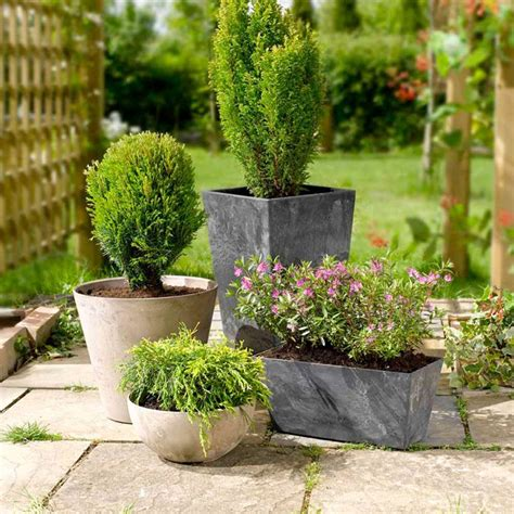 Caring For Container Plants  Suttons Gardening Grow How