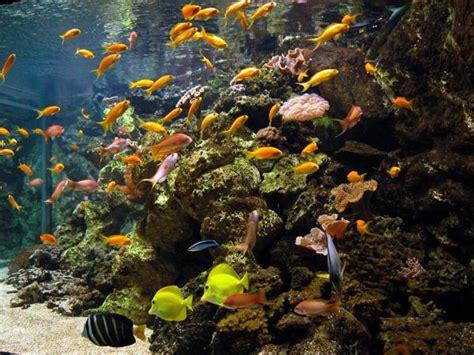 aquarium tropical de la porte dor 233 e 12e l officiel des spectacles