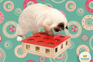 Mental stimulation toys for cats - LOVE FERPLAST
