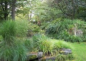 Alternative Zu Gras Garten : gr ser ziergr ser im schatten steingartenpflanzen im garten ~ Markanthonyermac.com Haus und Dekorationen