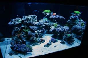 top reef tank aquascapes current tank info 30x30x18 quot 70 gallon cube bonsai inspired open