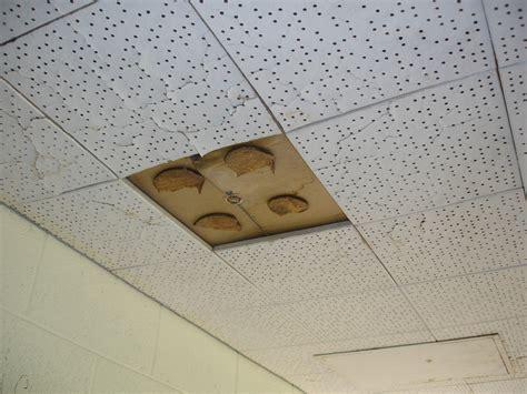 ceiling tile asbestos adhesive glue pods non asbestos 12 flickr