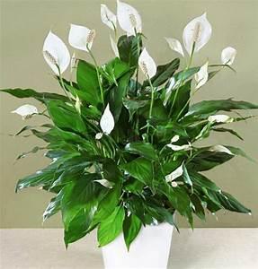 Pflegeleichte Zimmerpflanzen Mit Blüten : pflegeleichte zimmerpflanzen im schlafzimmer sorgen f r ruhigen schlaf ~ Markanthonyermac.com Haus und Dekorationen
