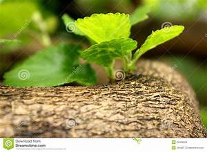 Young Leaves Stock Images - Image: 25429224