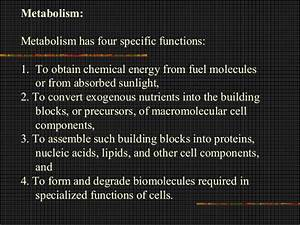 Bio 103 lecture 11_metbolism, enzymes, & respiration