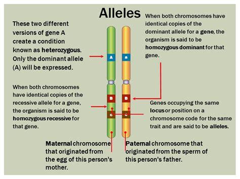 Alleles & Mutations. Genotype, Phenotype & Crosses.