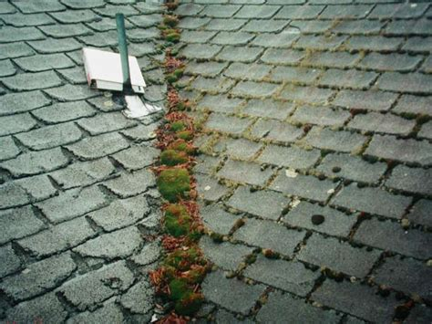 How To Prevent Moss On Roof Tiles Red Roof Inn Harrisburg Hershey Pa 17111 Coating Reviews Uk Myrtle Beach Plus Boston Logan 920 Broadway Saugus Ma 01906 Asphalt Shingle Leak Repair Westside Roofing Austin Texas Ram Promaster Rack Brackets Keylite Window Opening Pole