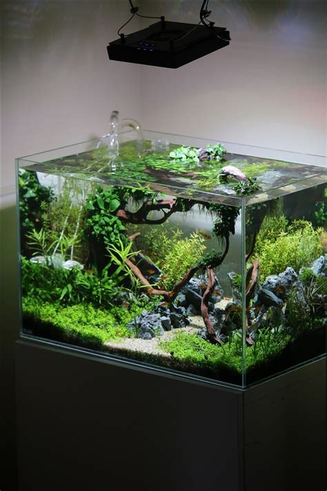 planted tank coisia vallem by lauris karpovs aquascape awards pin by aqua poolkoh