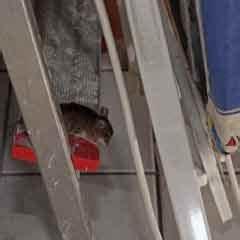 Mäuse Im Keller : kastein apex sch dlingsbek mpfung m use bek mpfen ~ Markanthonyermac.com Haus und Dekorationen