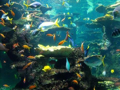 melvin d photographies 187 archives du 187 nausicaa boulogne mer
