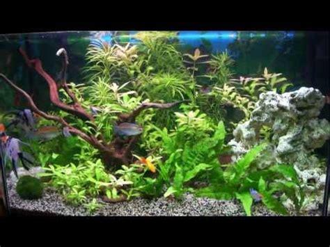 race poisson d aquarium eau chaude images