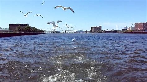 Flying Fish Boat Youtube by Hungry Seagull S Flying Eating Fish Following Our Boat