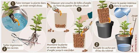 faire pousser des plantes en hydroculture jardinage