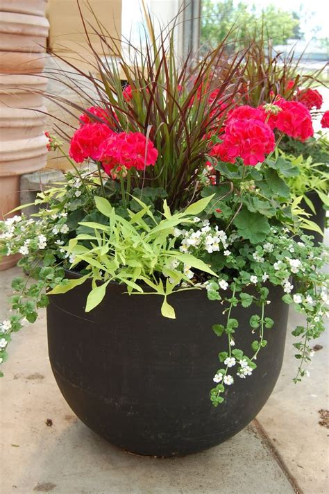 25 best ideas about potted plants on outdoor potted plants potted plants patio and