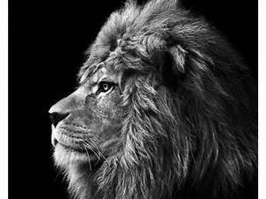 Kaffeetassen Schwarz Weiß : stilvolle lion bilder mit ausdrucksstarken motiven ~ Markanthonyermac.com Haus und Dekorationen
