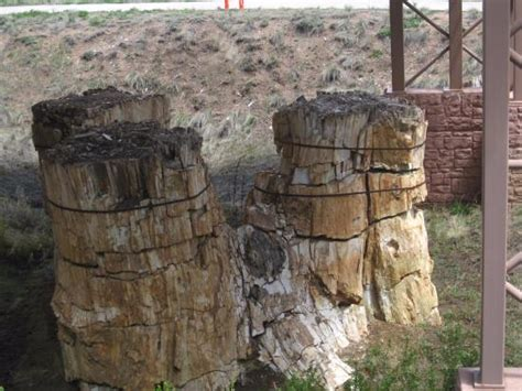 florissant fossil beds fossilized tree trunks picture of florissant fossil beds