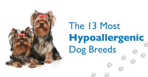 13 hypoallergenic breeds