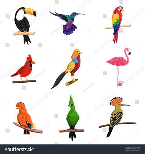 Exotic Birds Set Toucan Parrot Flamingo Stock Vector 294478250 Shutterstock