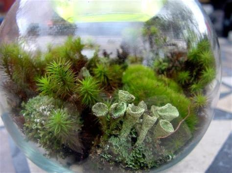25+ Best Ideas About Terrarium Kits On Pinterest Roofers Choice 15 Plastic Roof Cement Sds How To Stop Birds Landing On Your 2017 Mazda Cx 5 Rack Installation Roofing Energy Tax Credit The Rooftop Bar And Restaurant Small House Plans With Deck Best Top Reviews Tile Types Uk