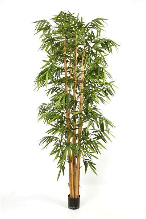 superb bambou en pot feuilles jaunes 9 forum du bambou et plantes exotiques devenez