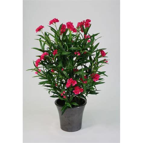 laurier pour tous les animaux la plante est extr 234 mement toxique des feuilles au tronc et