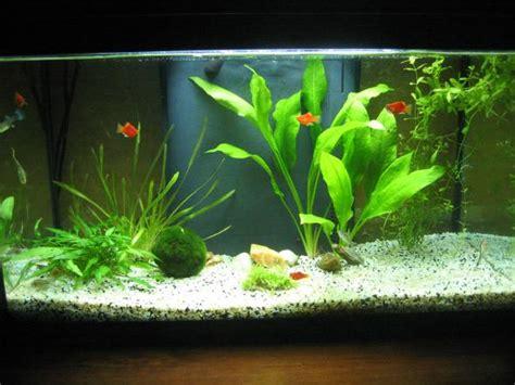 poisson aquarium 60 litres residentieel complex