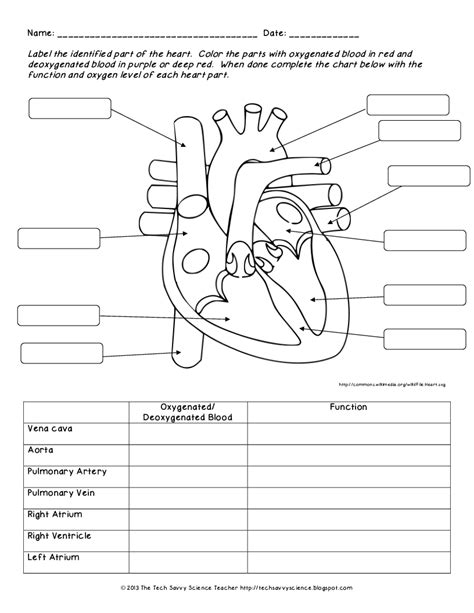 Circulatory System Labeling Worksheet Answers Archives  Human Anatomy Chart