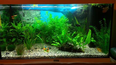 quels poissons pour juwel 125l plant 233