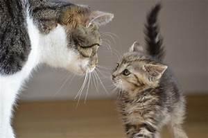 Löwe Sternzeichen Von Wann Bis Wann : wann sind katzen ausgewachsen katzenkram ~ Markanthonyermac.com Haus und Dekorationen