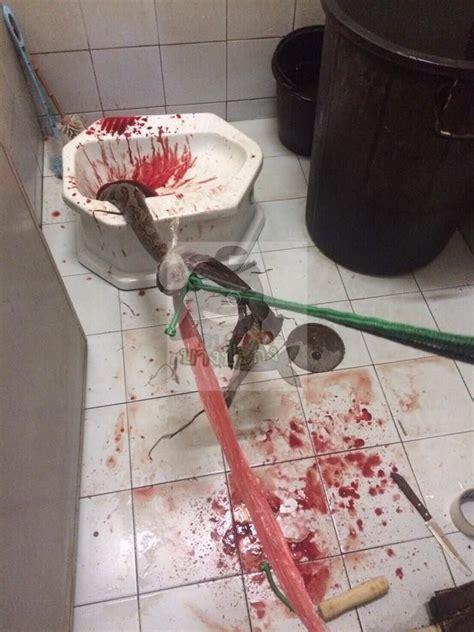 tha 239 lande un homme se fait mordre le p 233 nis par un python alors qu il est assis sur la toilette