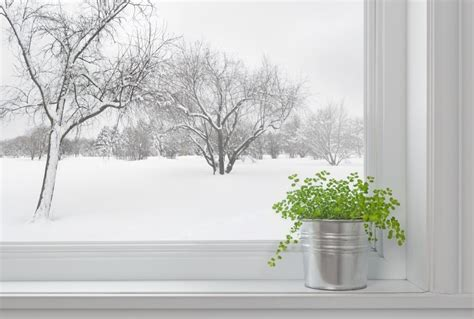 Beat The Winter Doldrums With Indoor Herbs  Off The Grid News