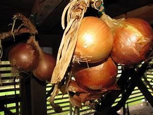 Kartoffeln Und Zwiebeln Lagern : zwiebeln ernten und lagern plantura ~ Markanthonyermac.com Haus und Dekorationen