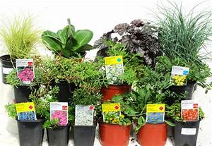 Welche Fliesengröße Für Welche Raumgröße : pflanzen set f r steing rten ca 5 m pflanzen versand f r die besten winterharten ~ Markanthonyermac.com Haus und Dekorationen