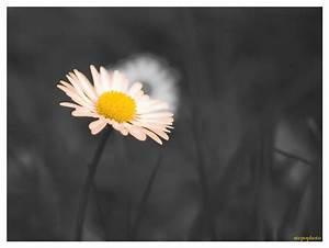 Kaffeetassen Schwarz Weiß : schwarz wei g nse blume foto bild natur makros natur kreativ aufnahmetechniken bilder auf ~ Markanthonyermac.com Haus und Dekorationen