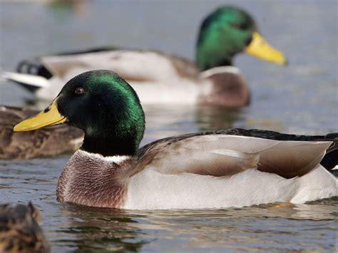 Duck Boat Kills Woman by Duck Tour Boat Hits Kills Woman In Boston Story