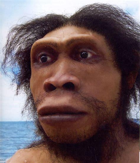 Homo Ergaster La Talla Y Proporción Del Cuerpo Es Similar
