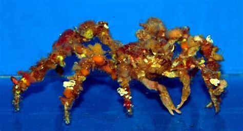 something fishy aquarium livestock inverts clams