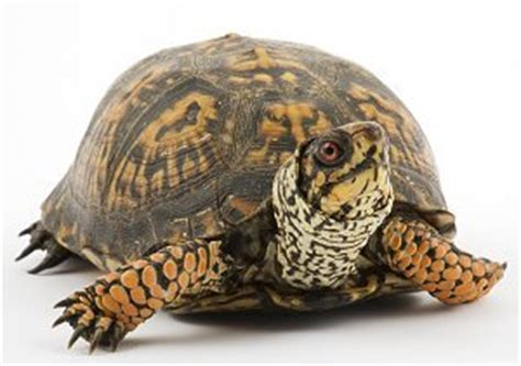 learn about the care and requirements of reptiles and lizards