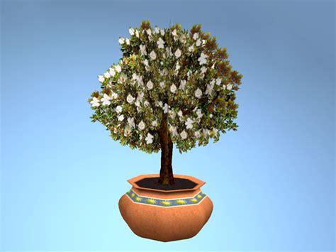 second marketplace magnolia tree