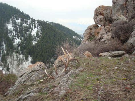 northern utah elk sheds contest winner monstermuleys