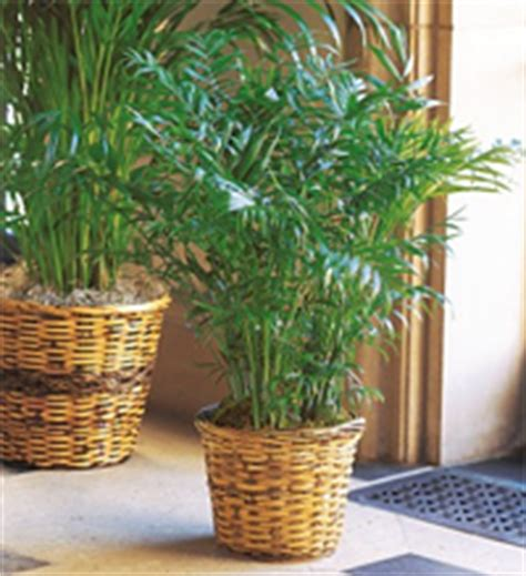 plantes d int 233 rieur quelle plante d int 233 rieur choisir le journal du jardin