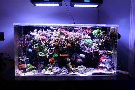 aquarium recifal pas cher poisson naturel